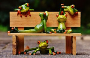 frogs-1644949_1920